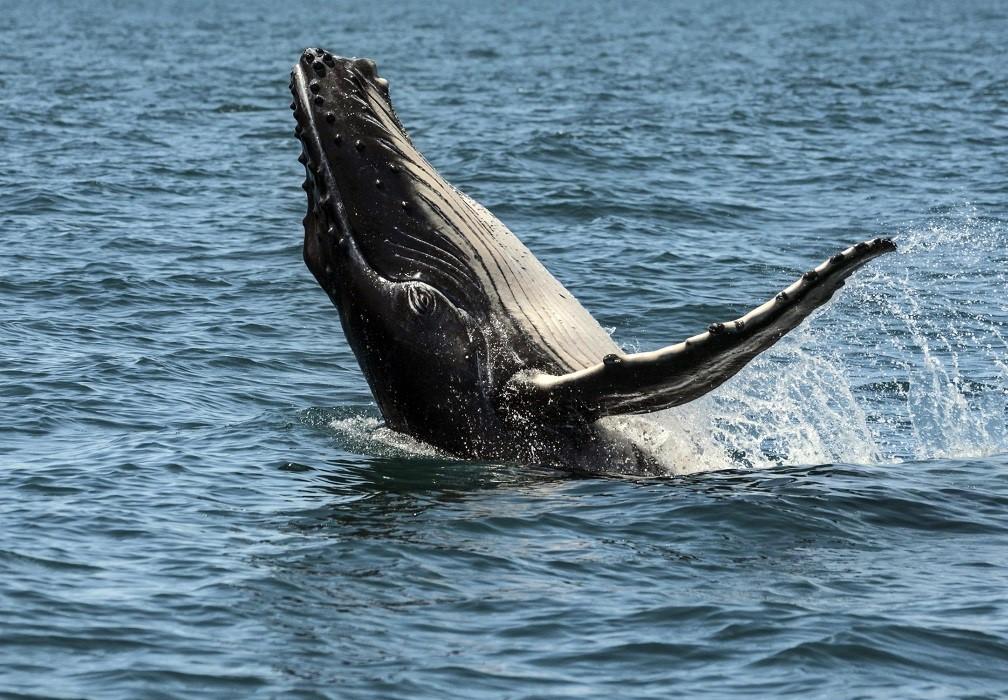 Pózol a bálna