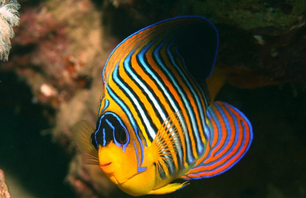 The marine life of the Red Sea is simply beautiful