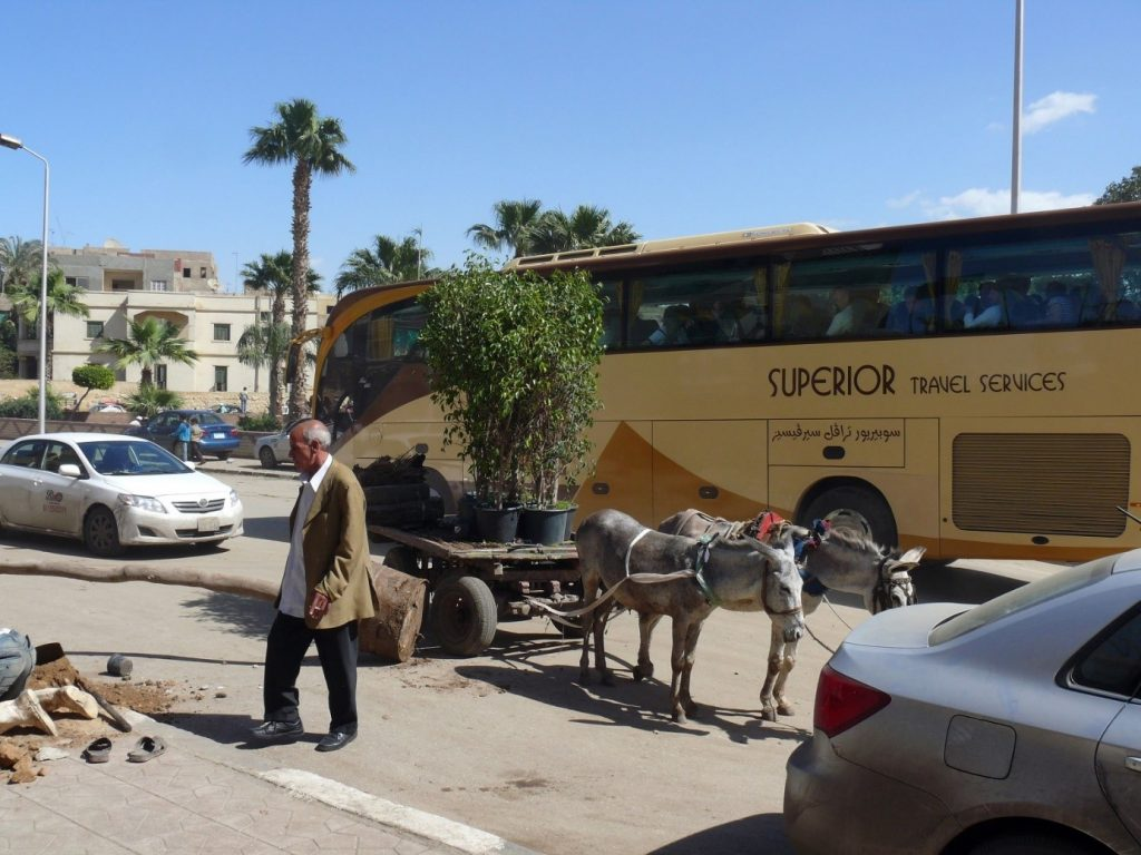 Luxury coach and donkeys on the streets of Cairo